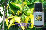 tinh dầu ngọc lan tây